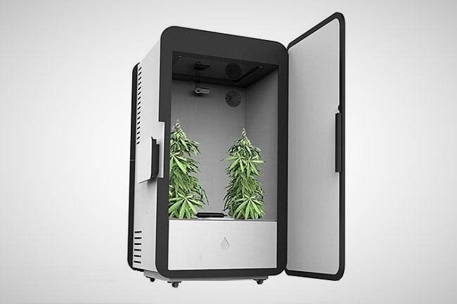 Leaf Cannabis Growing System 4