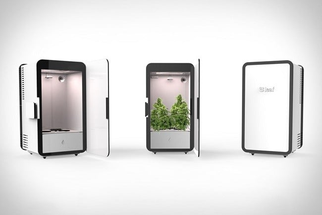 Leaf Cannabis Growing System 5