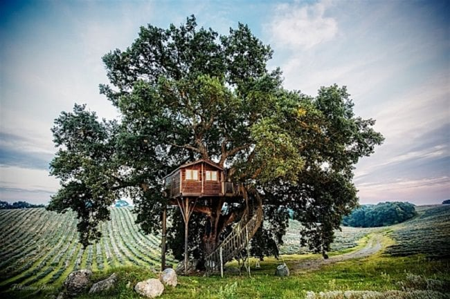 """La Piantata"" Tree House B & B"