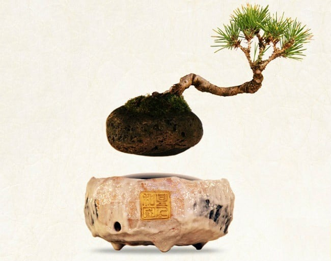 Air Bonsai Levitating Plants 1