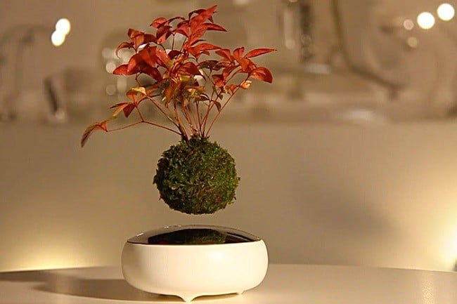 Air Bonsai Levitating Plants 3