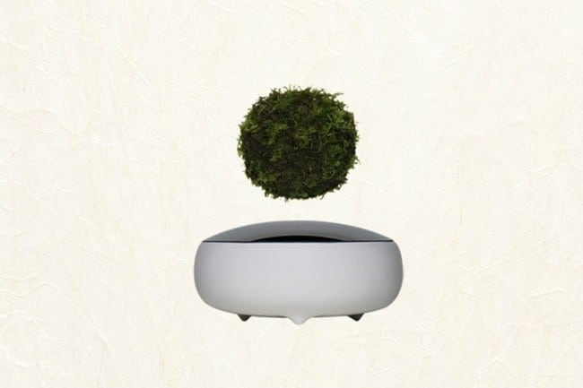 Air Bonsai Levitating Plants 4