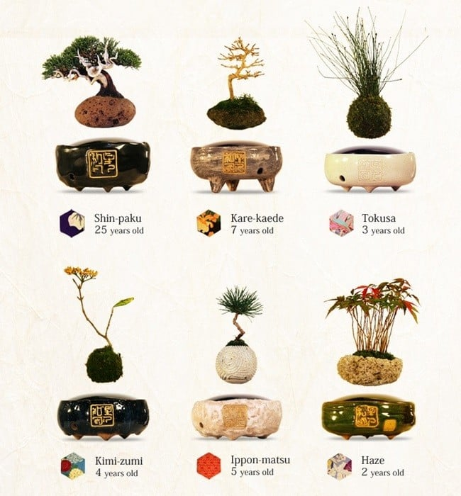 Air Bonsai Levitating Plants 5