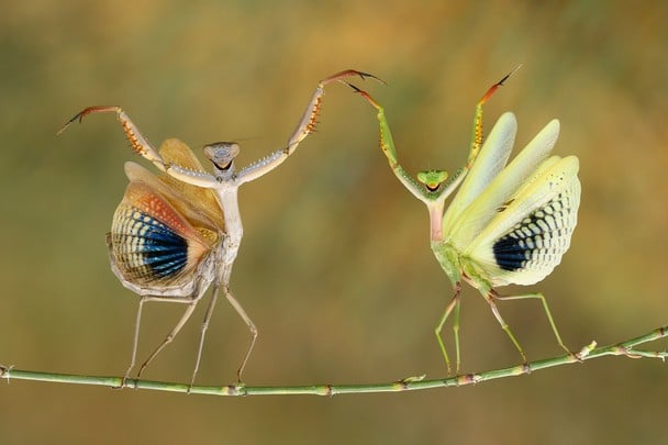National Geographic 2014 Photo Contest7