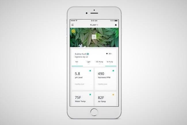 Leaf Cannabis Growing System 1