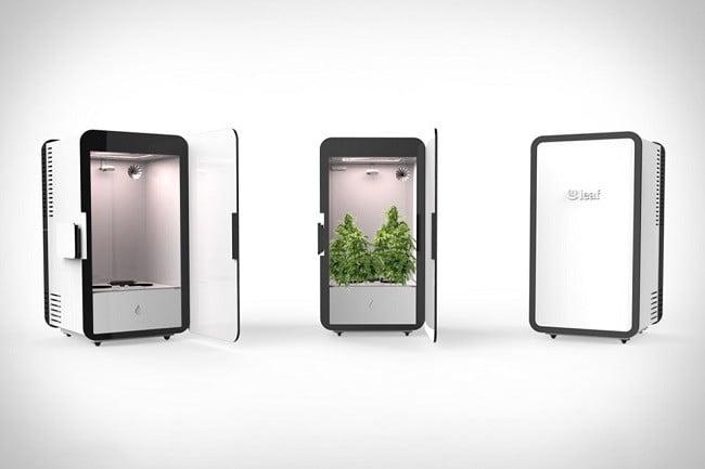 Leaf Cannabis Growing System 5
